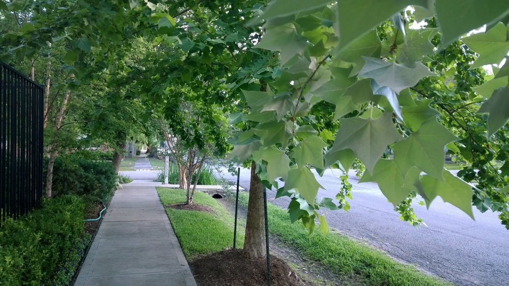 A view down one of the streets on which I walk Ramona morning and evening. Houston, Texas, May 2014.