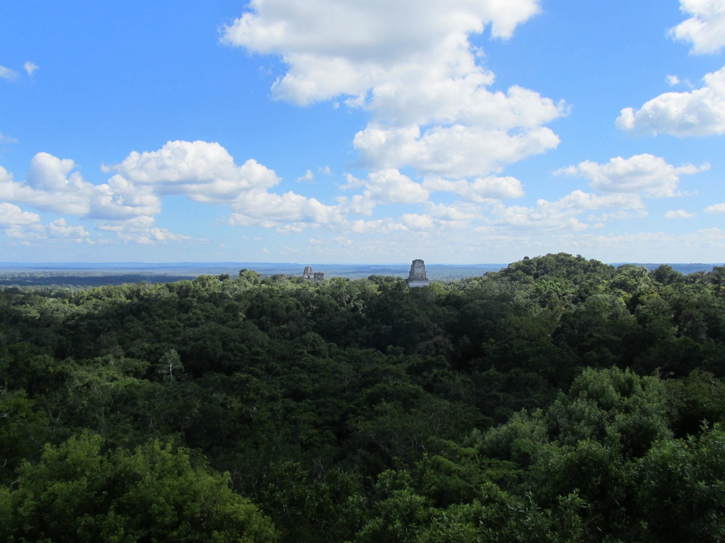 Atop the highest vantage point in Tikal, Guatemala. December 2012.