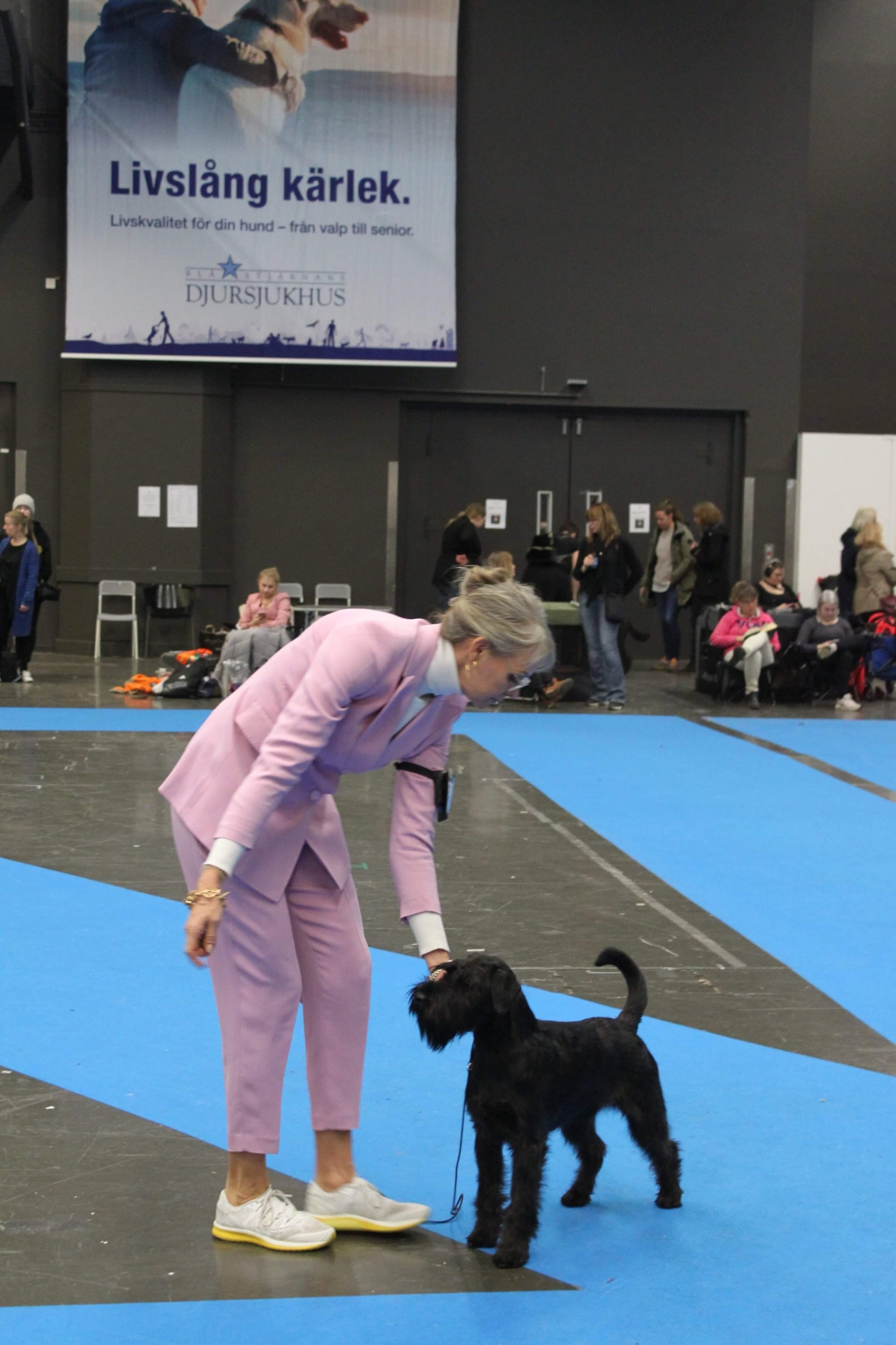 Best of breed puppy Velvet Dandy´s Nidhögg