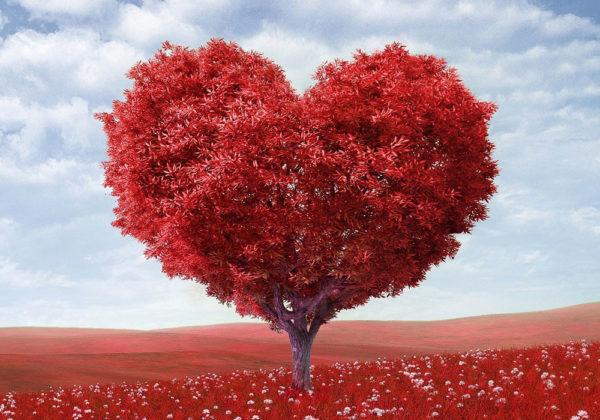 Amore litter - Velvet Dandy´s Bellamore OrlockVelvet Dandy´s Lolita  Velvet Dandy´s Cicciolina  Velvet Dandy´s Ben AmoreVelvet Dandy´s Casanova  Velvet Dandy´s Lord Byron  Velvet Dandy´s ValentinVelvet Dandy´s Gigolo