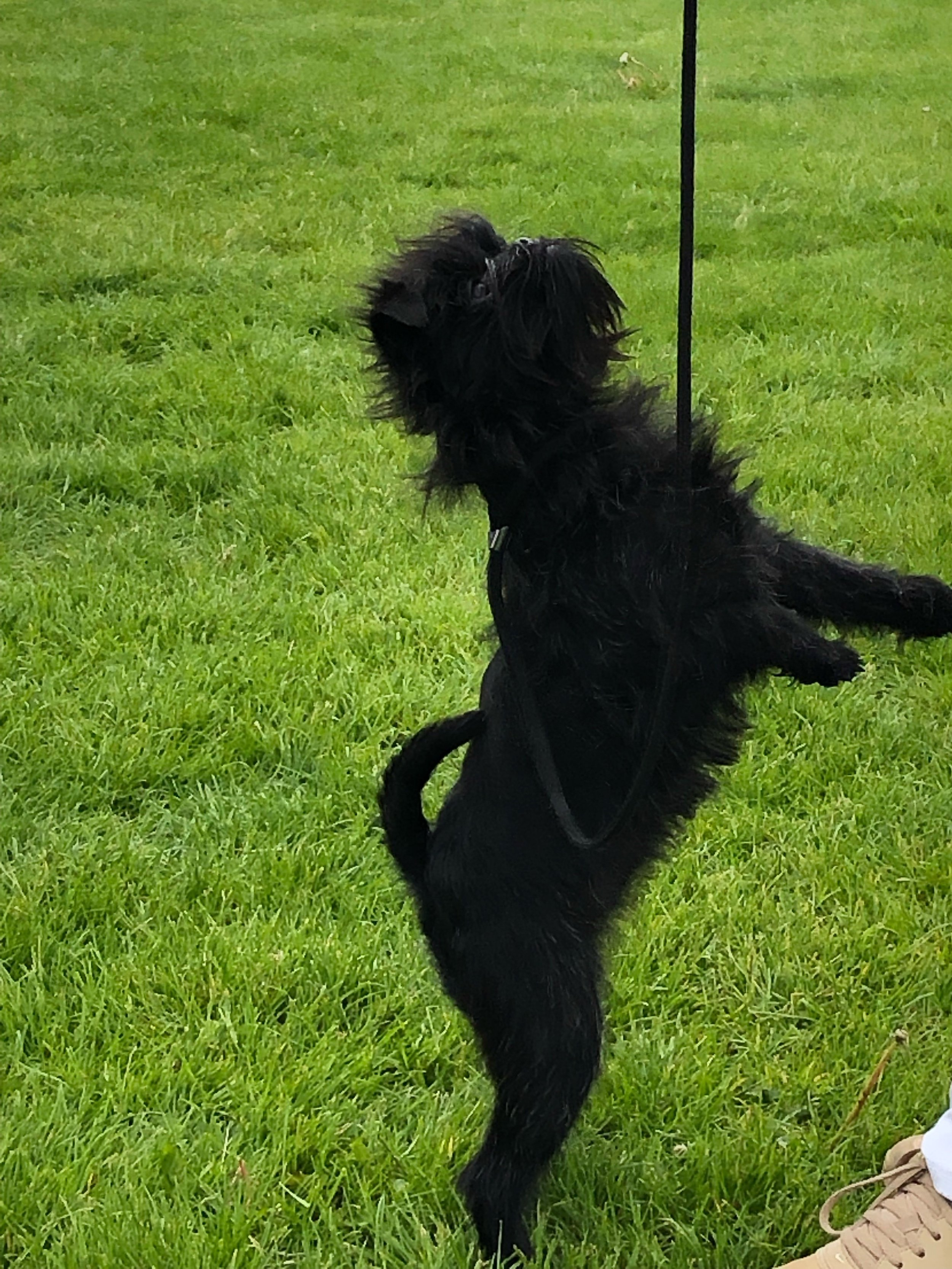 Jola in BEST IN SHOW puppy always with attitude