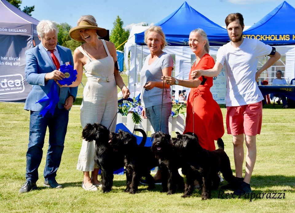 BEST IN SHOW 2 BREEDERS GROUP with our black schnauzers