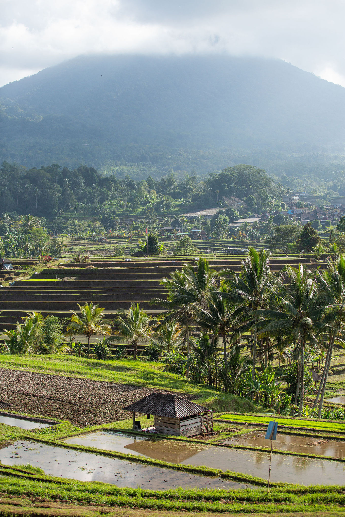 TheWrightLine-Bali-Stills-29-1400x2100-801aa923-e07c-4f04-9b33-ce2bf797a754.jpg