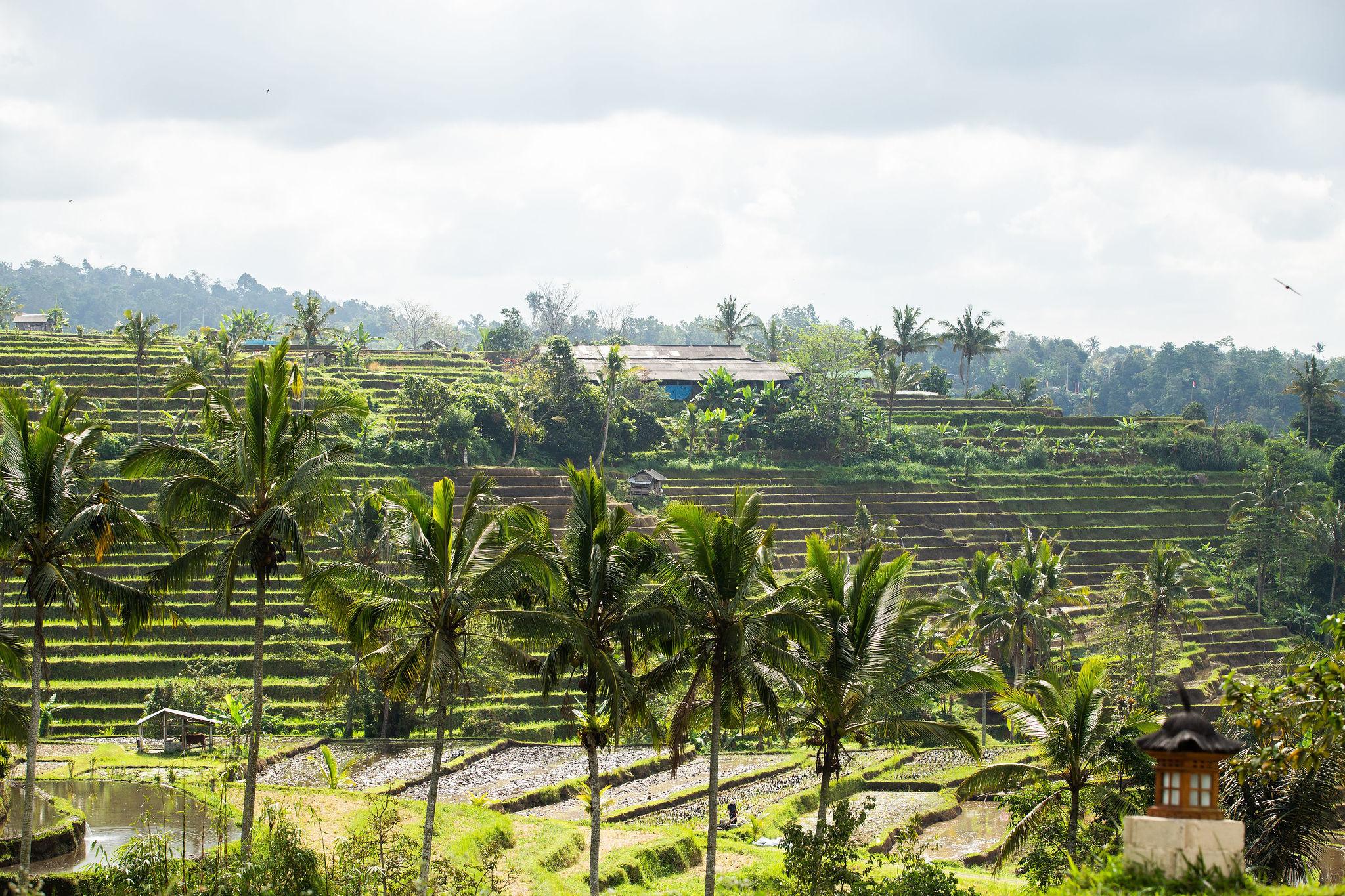 TheWrightLine-Bali-Stills-30-2048x1365-816f82c7-6714-4481-b912-8f45c3f7e192.jpg