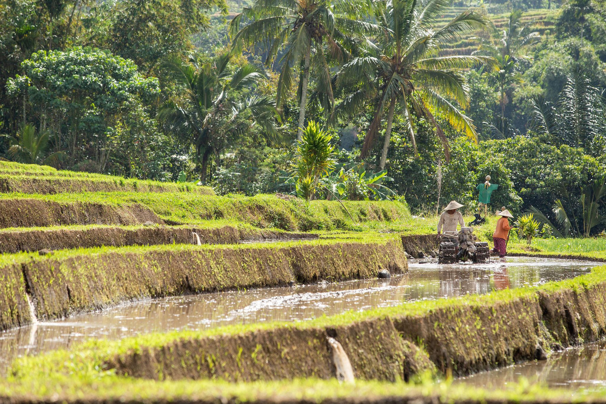 TheWrightLine-Bali-Stills-36-2048x1365-20c6a0fd-25c0-460a-8522-8faf745f4e25.jpg