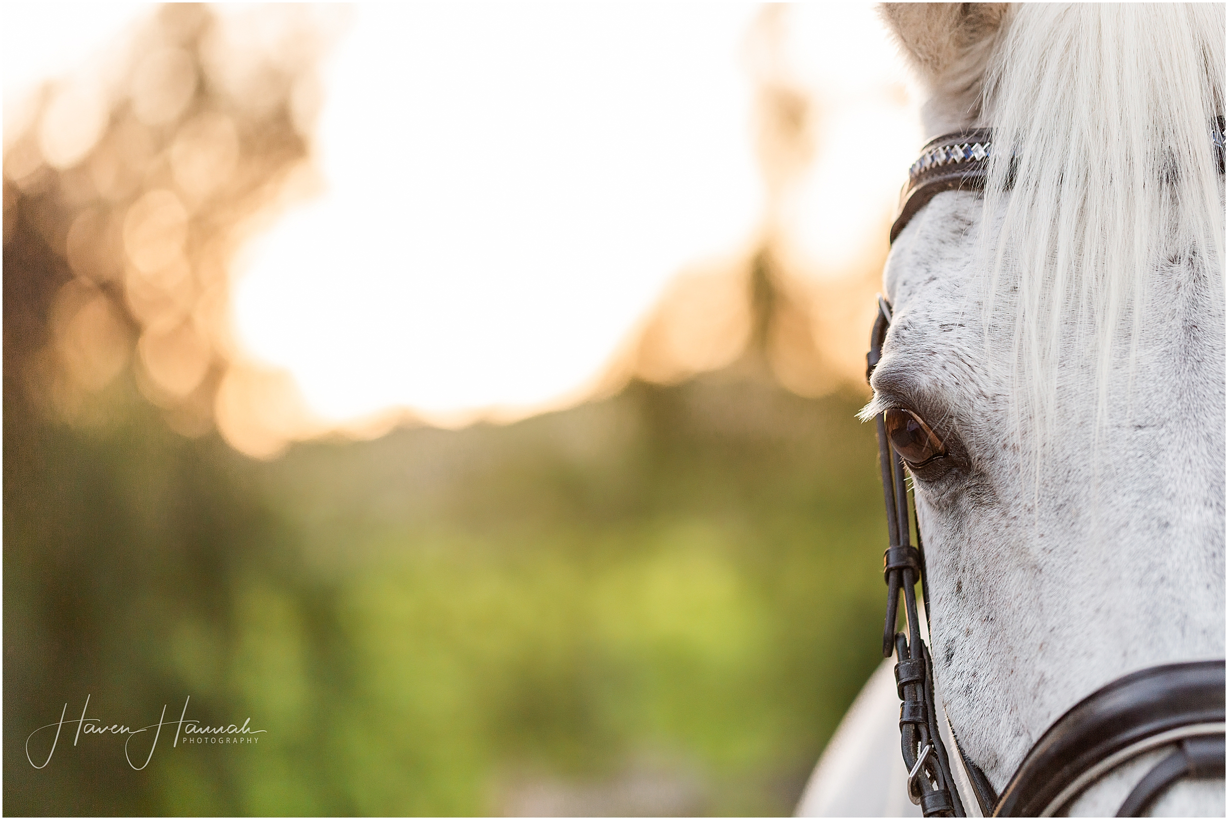 los-angeles-horse-photography