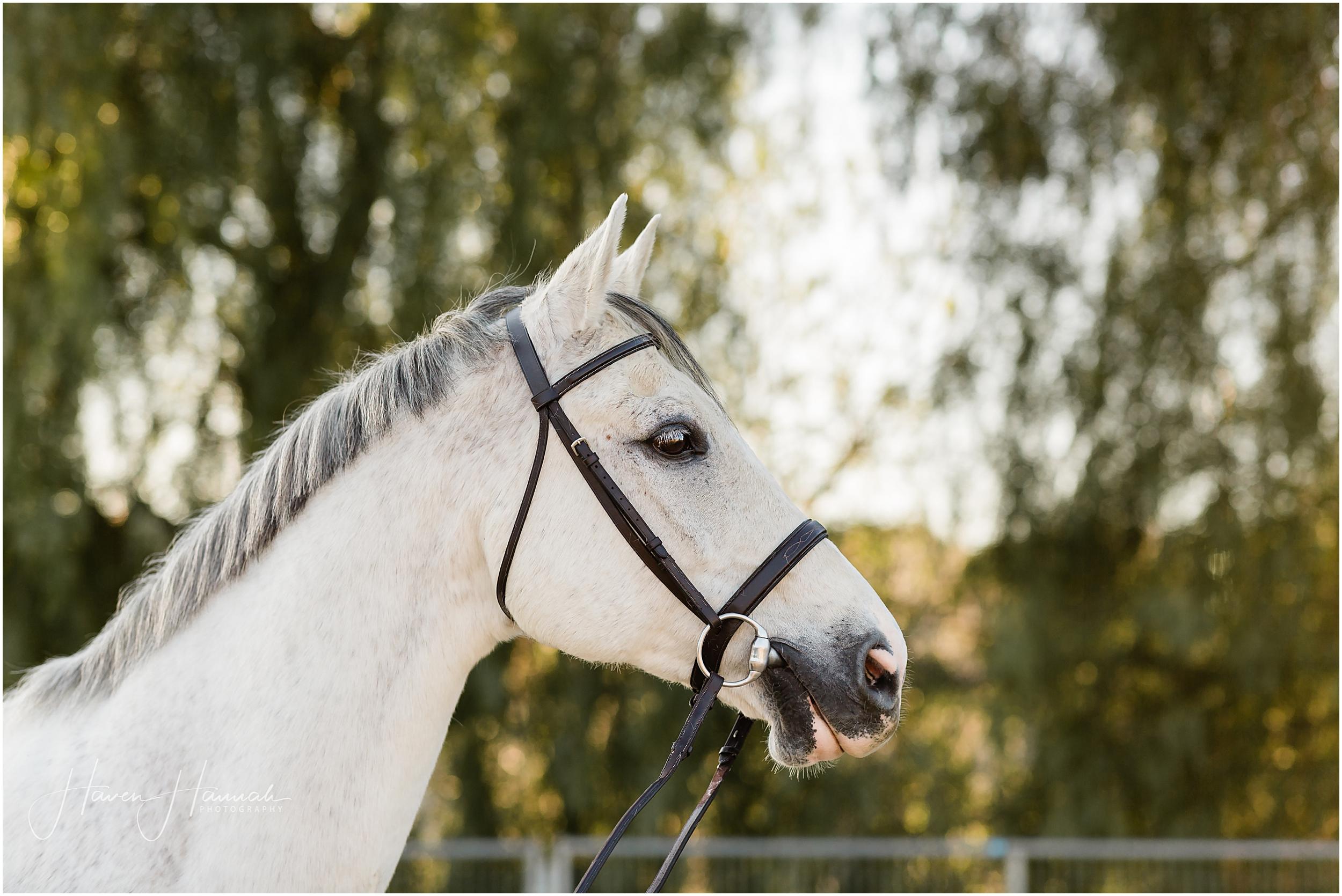 equine-portrait