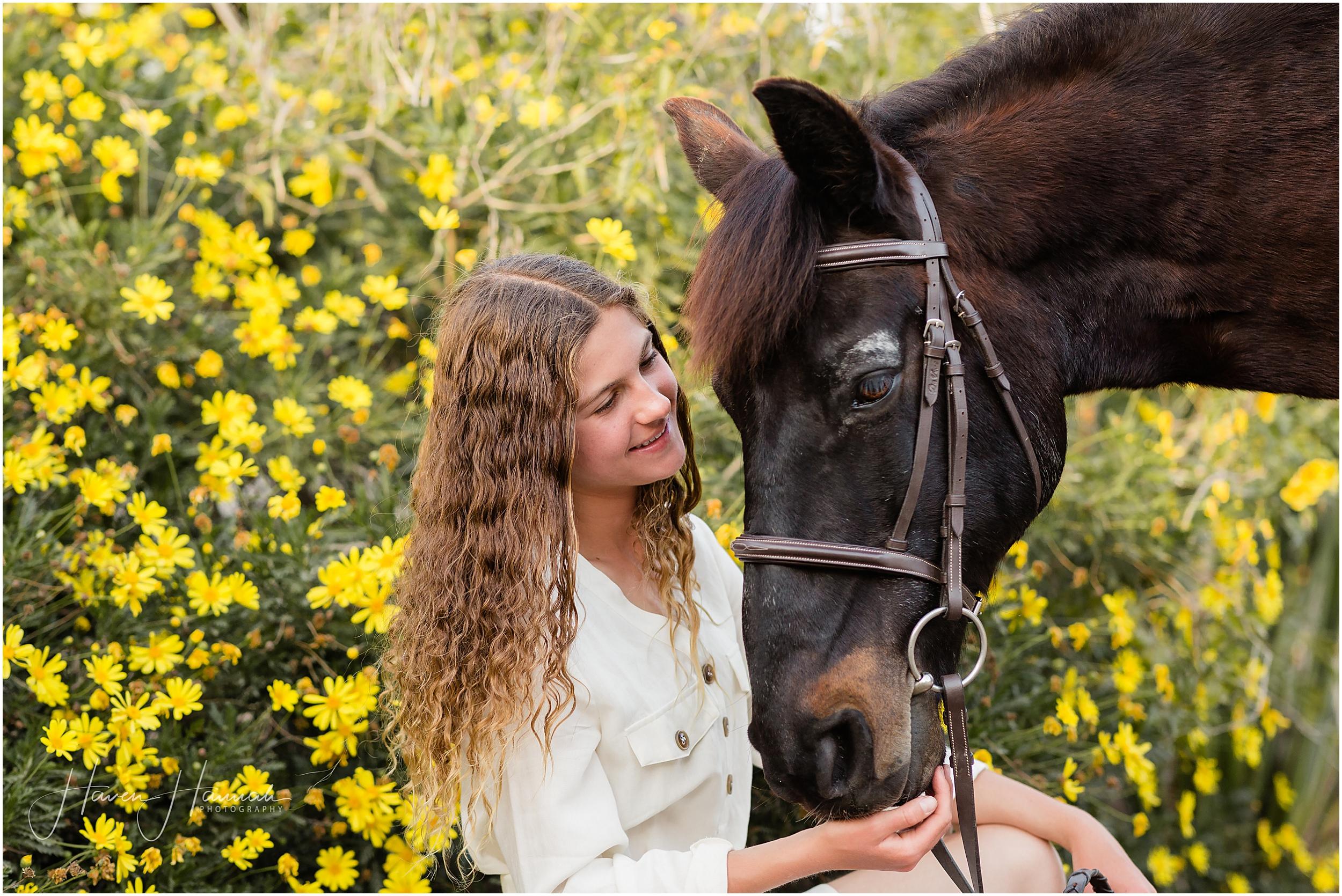 horse-photographer