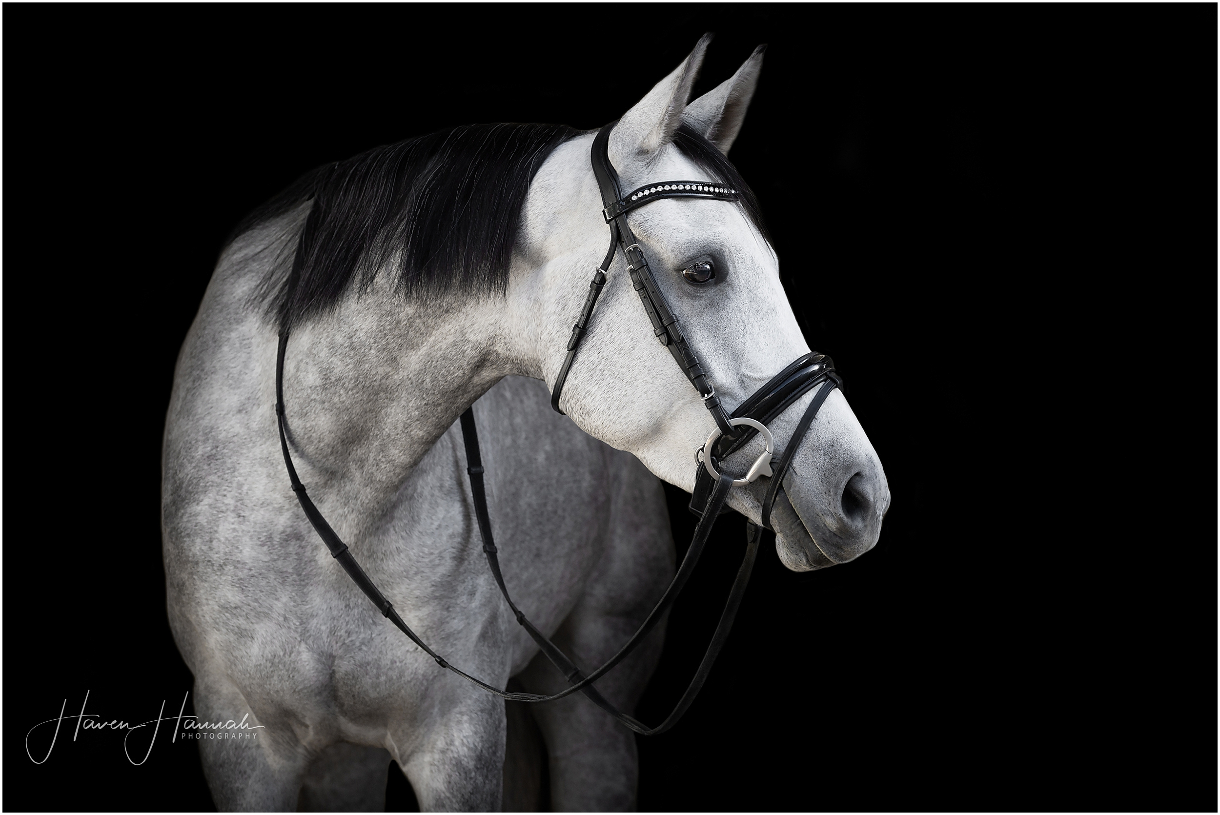 black-background-portait-horse