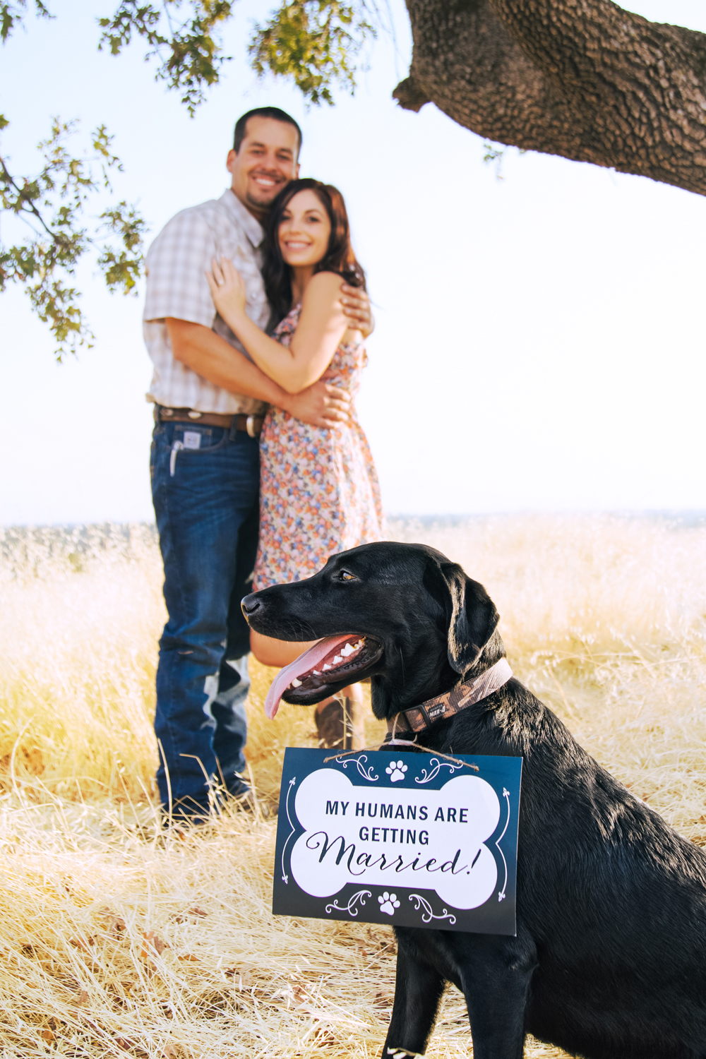 Engagement-with-Dog-photography-Upper-Bidwel-Park-Chico-5.jpg
