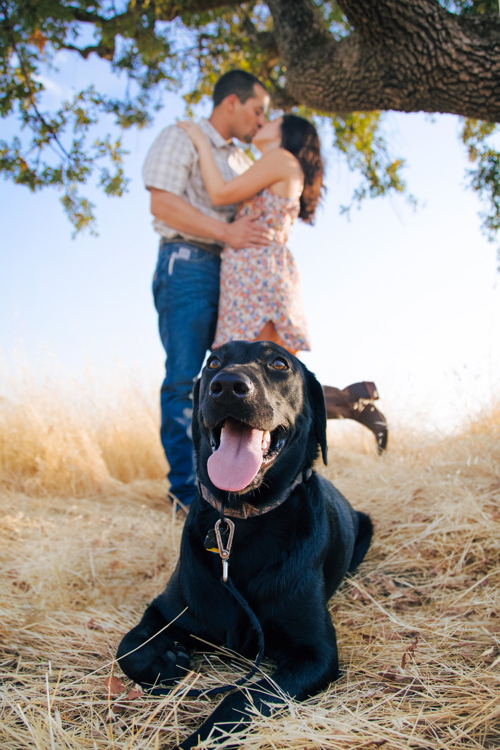Engagement-with-Dog-photography-Upper-Bidwel-Park-Chico-17.jpg