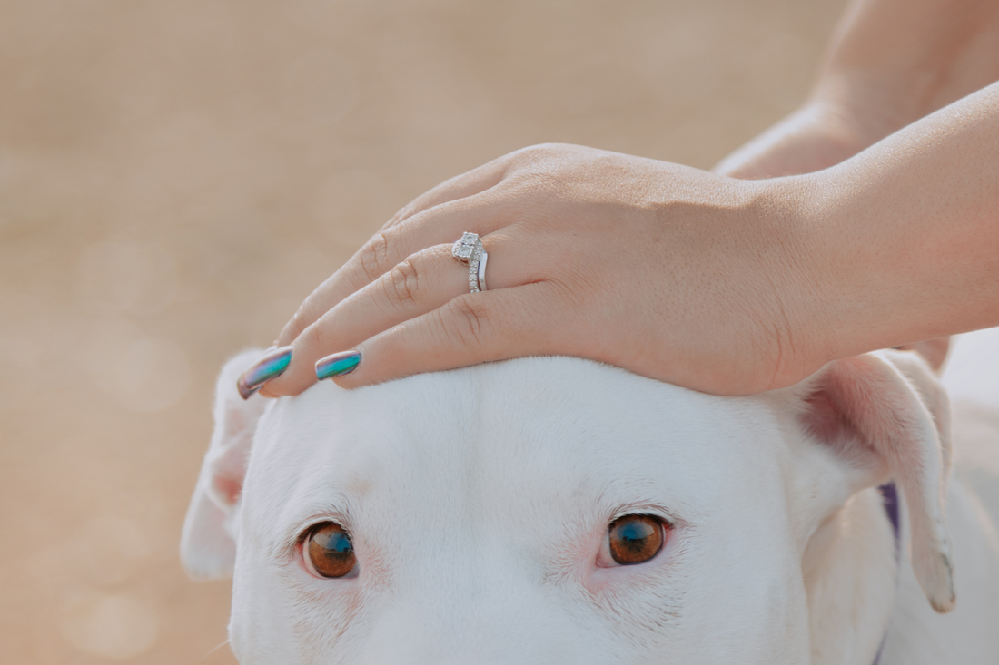 Chico-ca-engagement-photographer-with-dogs-Engagement-10.jpg