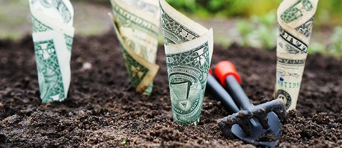 Growing money will be easier than this.  Photo credit:  pexels