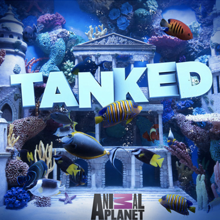 ANIMAL PLANET  TANKED - CUSTOM AQUARIUM INSERTS