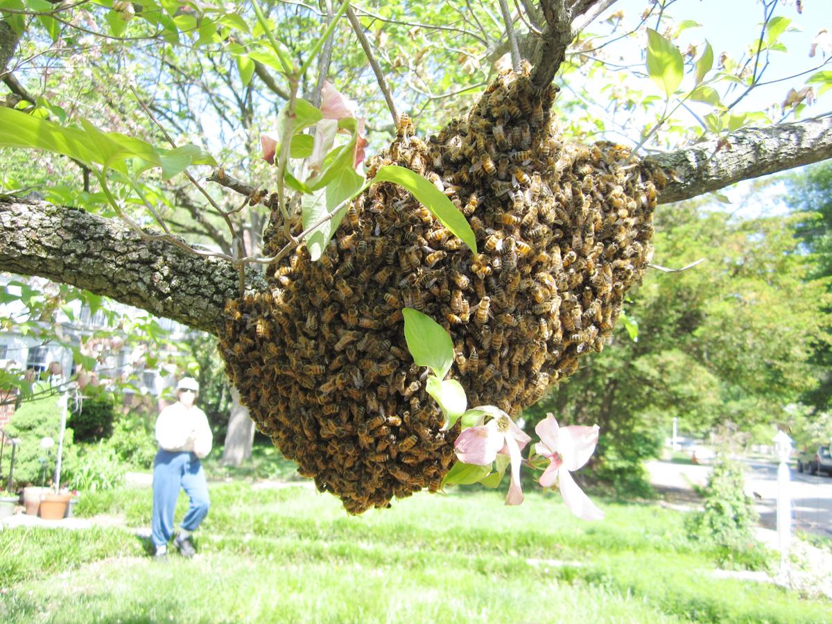 swarm-o-bees.jpg