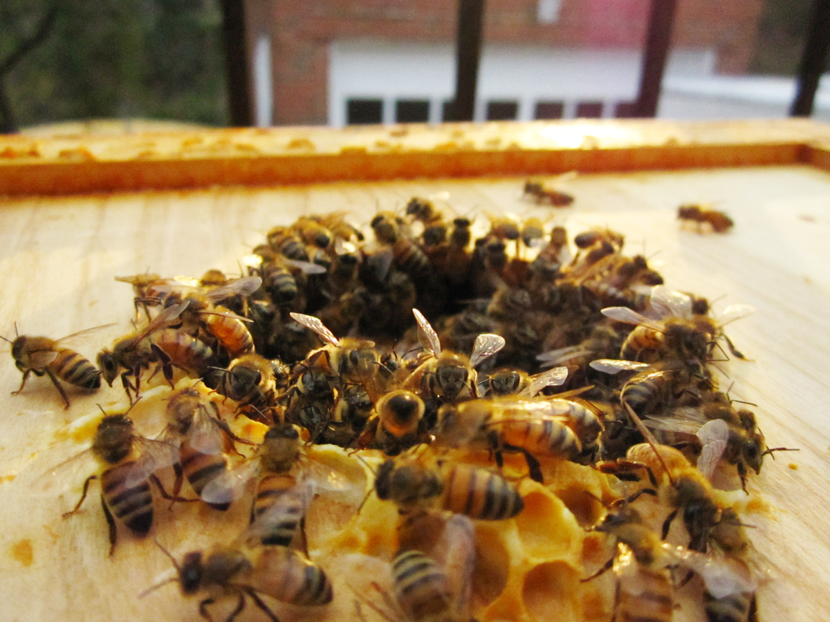 bees-entering-hive-HOMEpg.jpg
