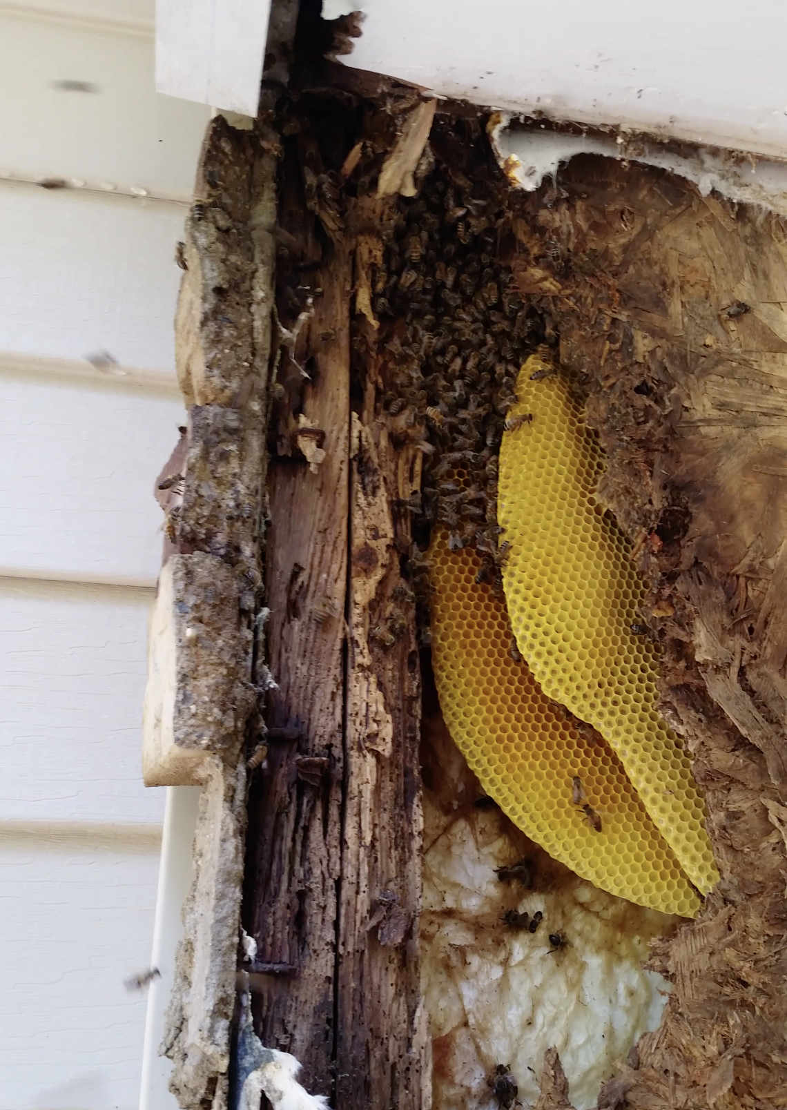 structural-exterior-swarm.jpg