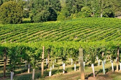 Eastern Piedmont -