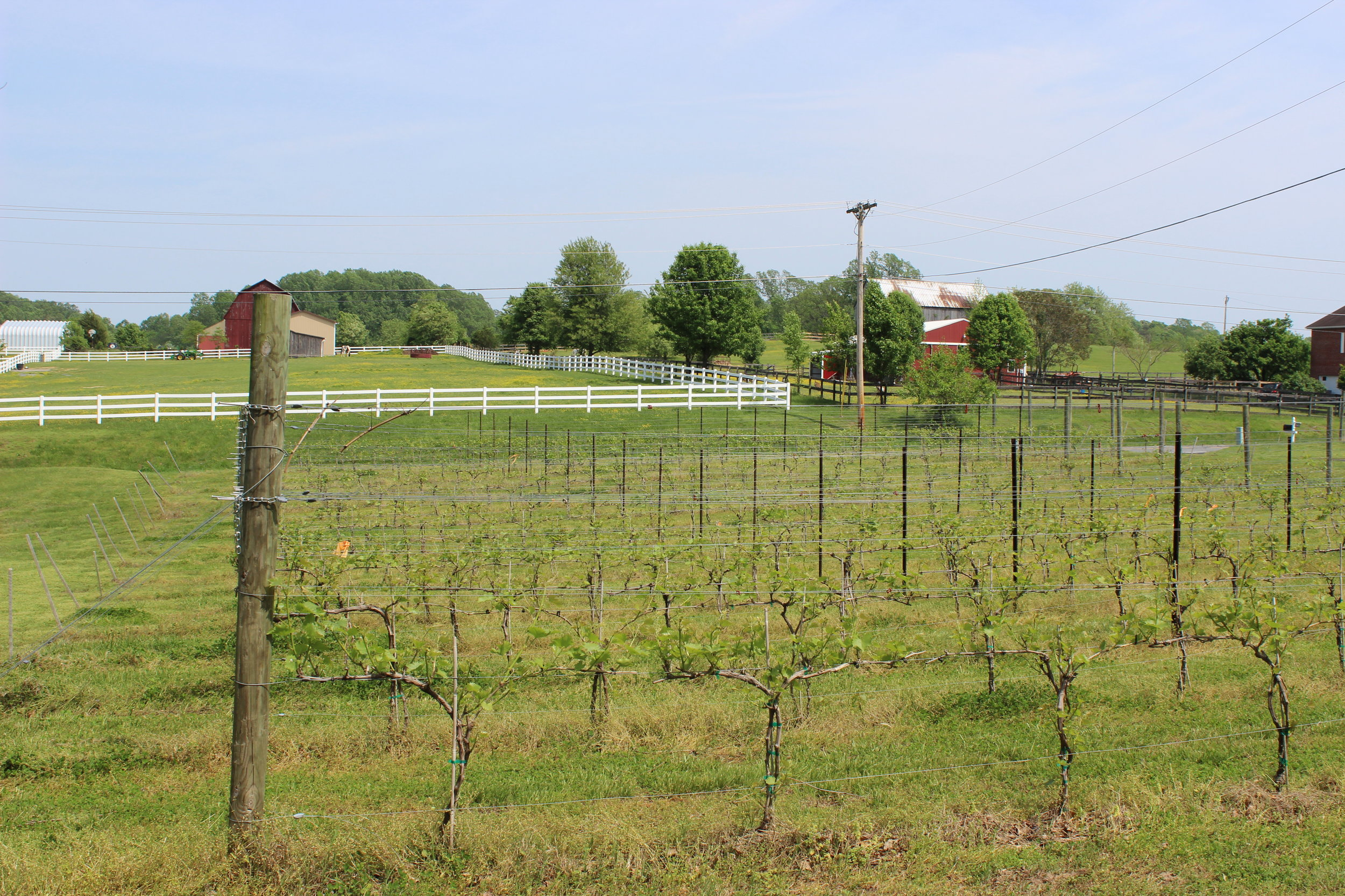 Slack Winery and Vineyard