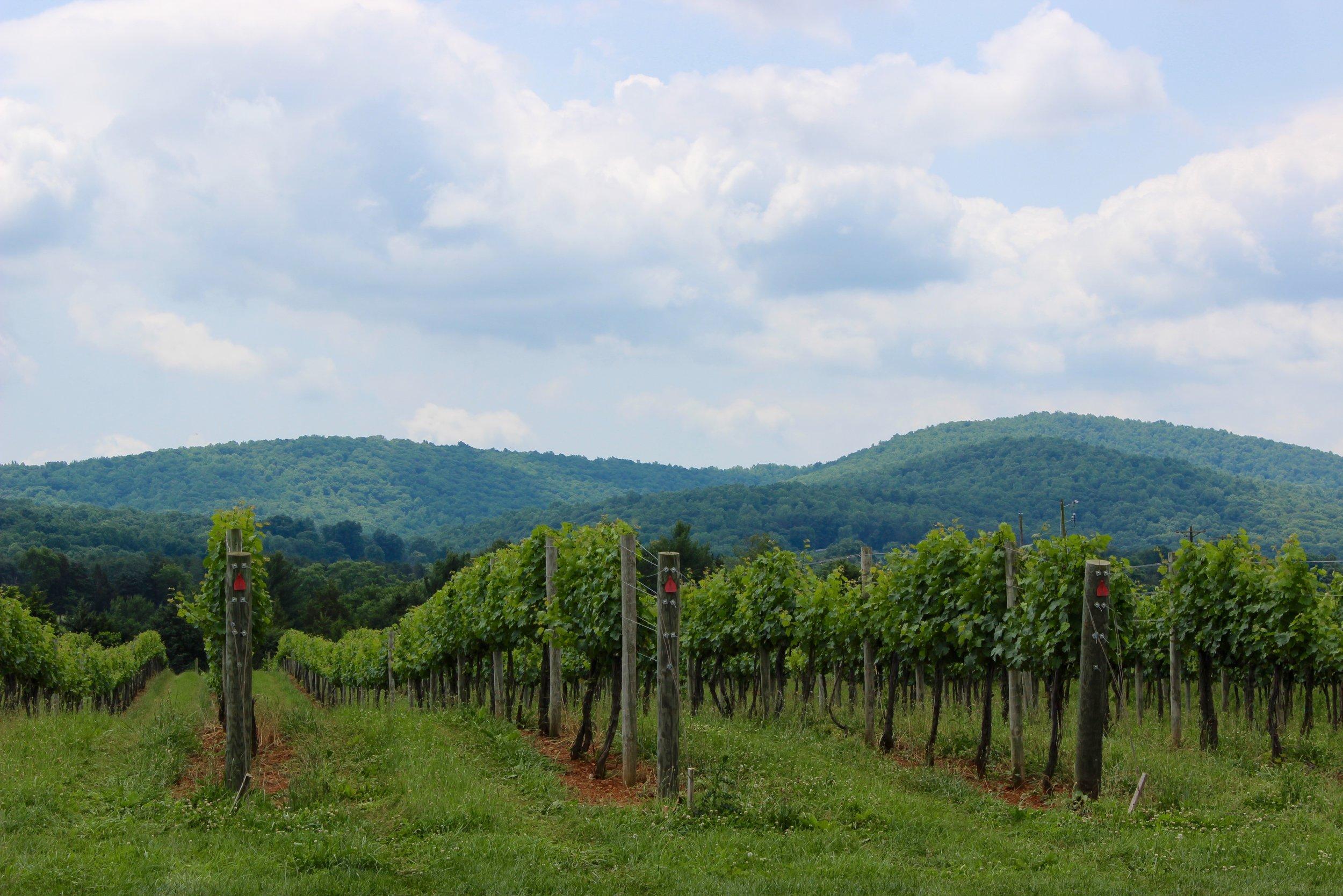 Chestnut Oak Vineyard