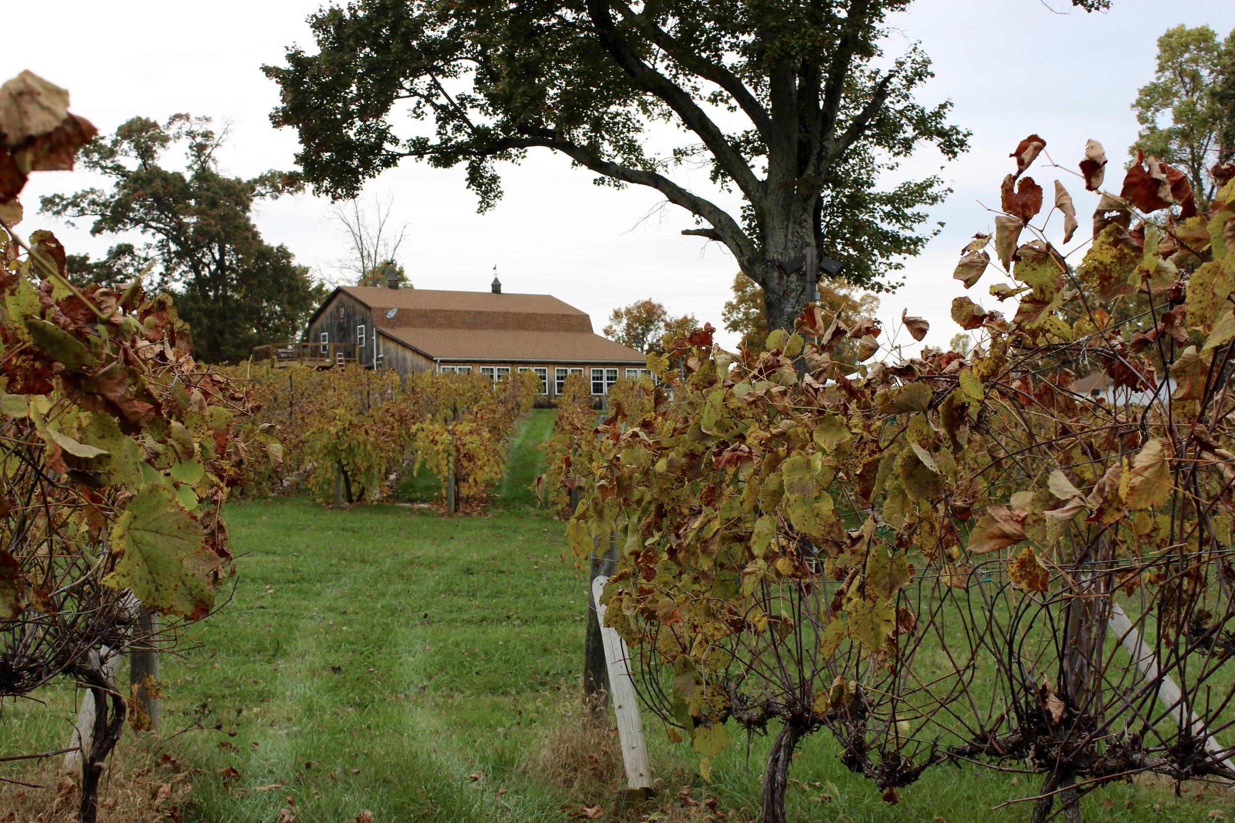 Devault Family Vineyards