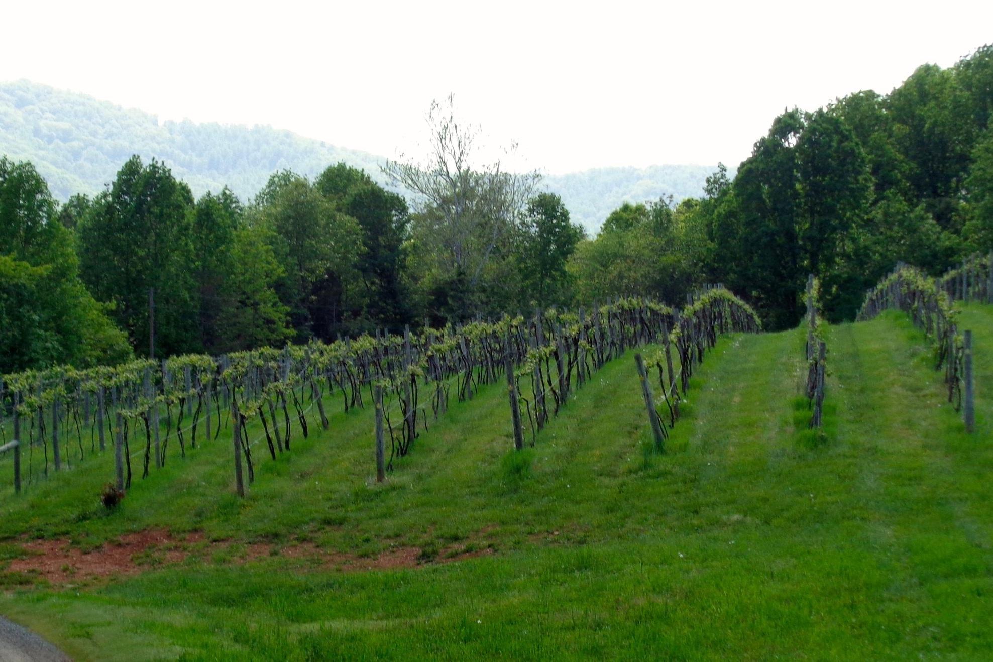 Kilaurwen Winery