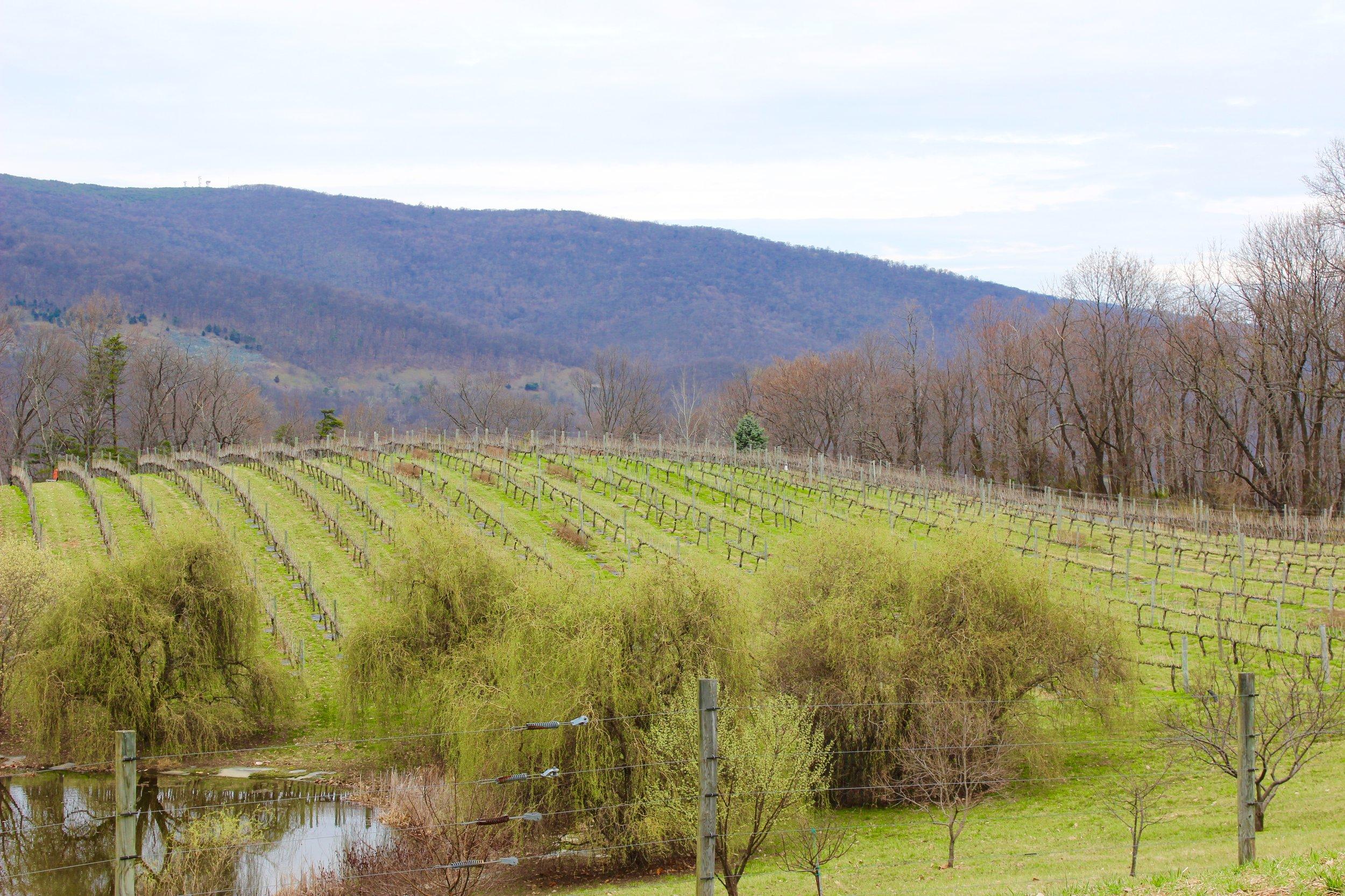 Turk Mountain Vineyards