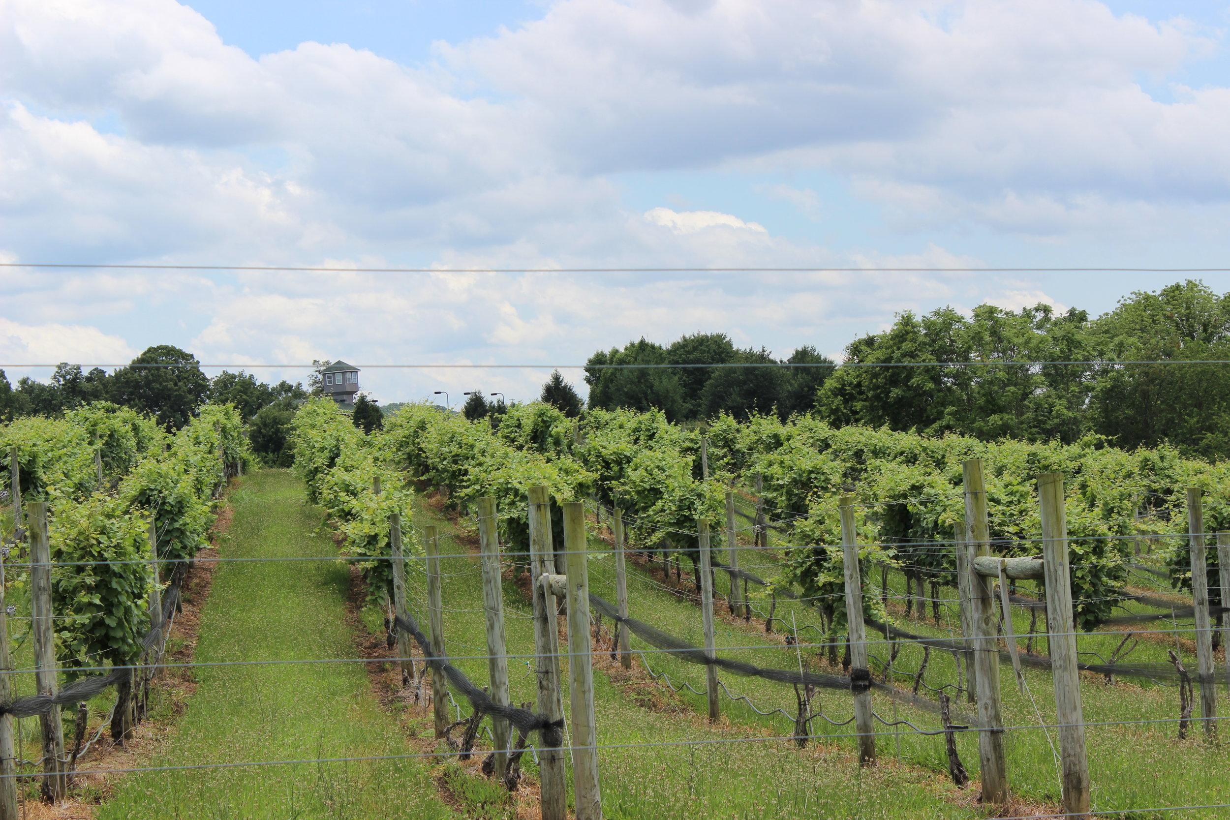 Eagletree Farm Vineyards