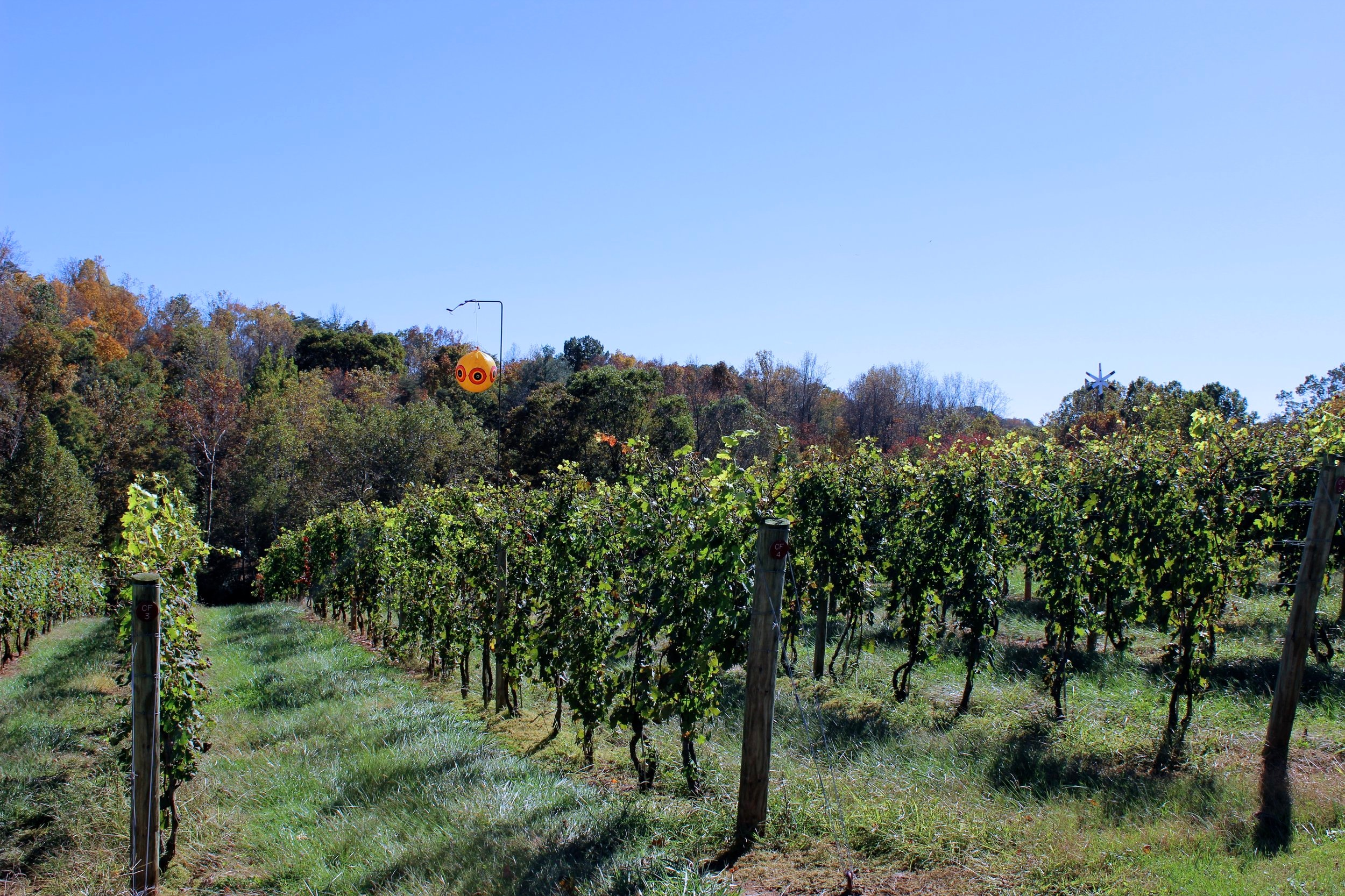 Magnolia Vineyards