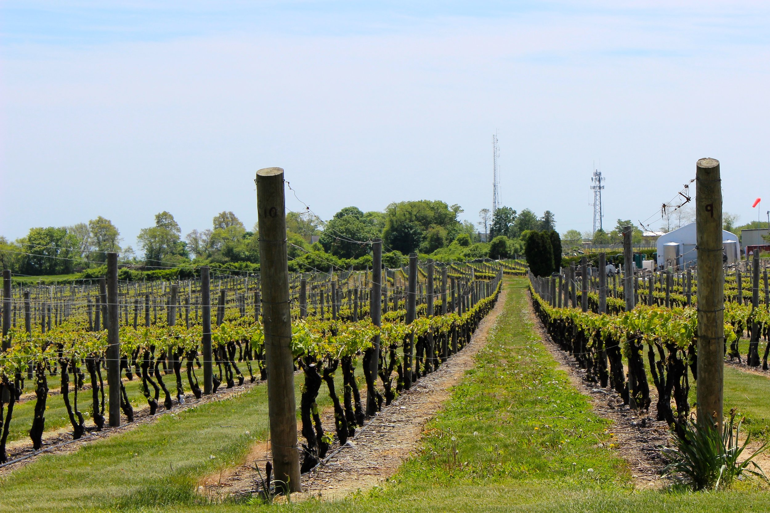 Block Island Vineyards