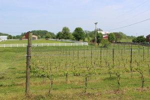 Xella Winery and Vineyard