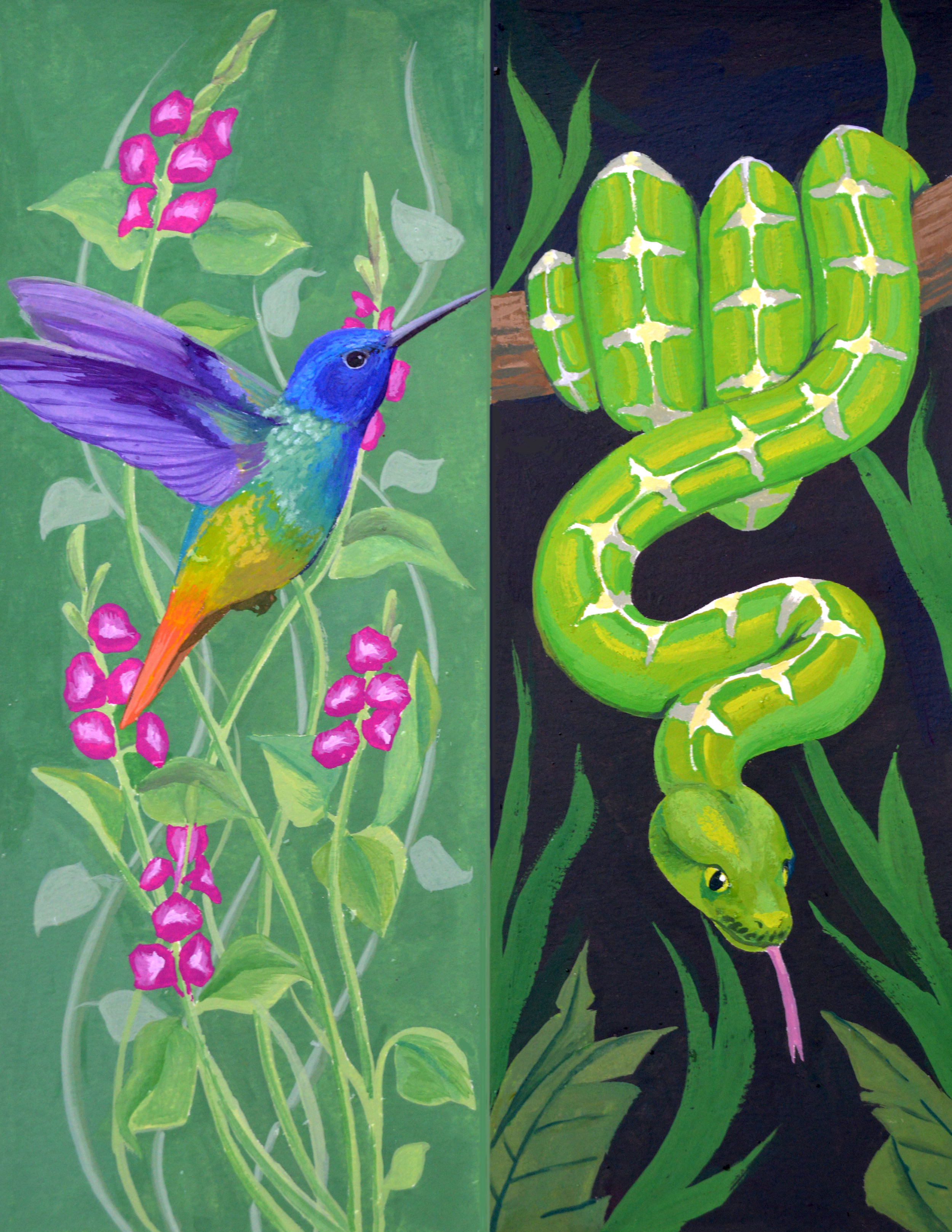 Golden-tailed Sapphire Hummingbird and Green Tree Python