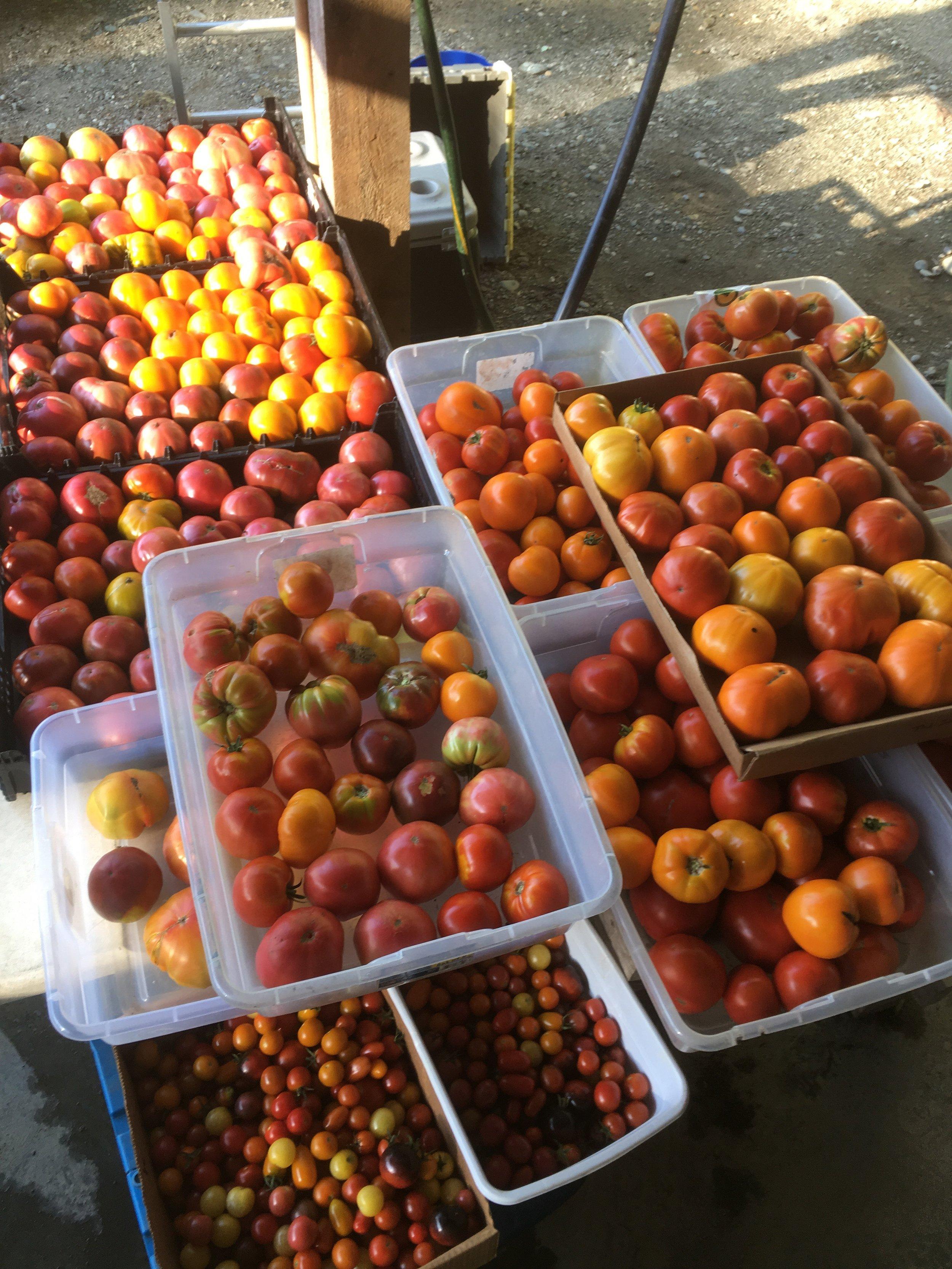 Tomatoes heading to restaurants last Friday