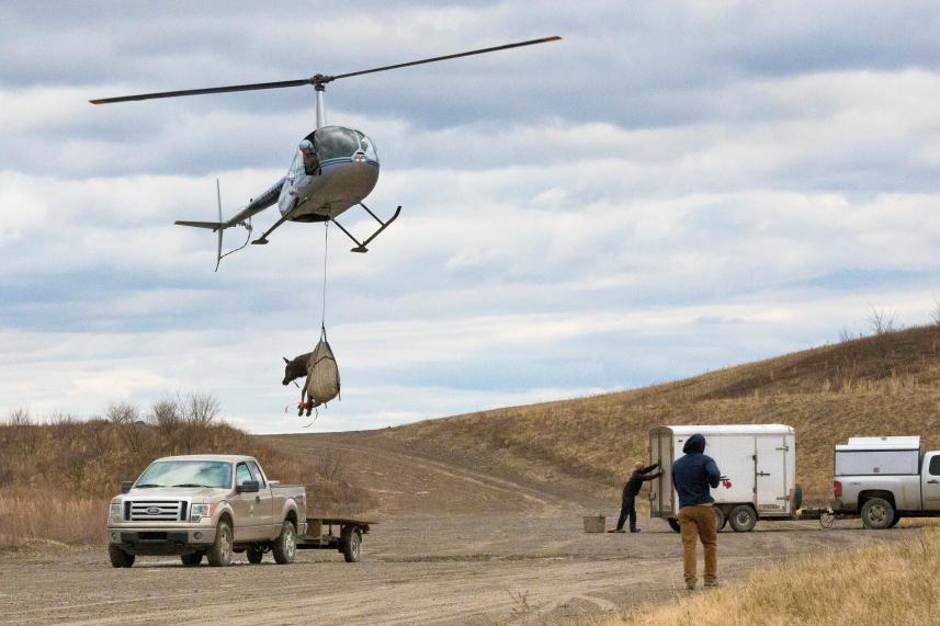 helicopter_elk.JPG