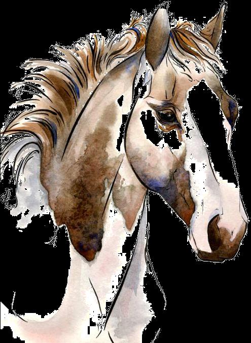 NicePng_horse-png_5956.png
