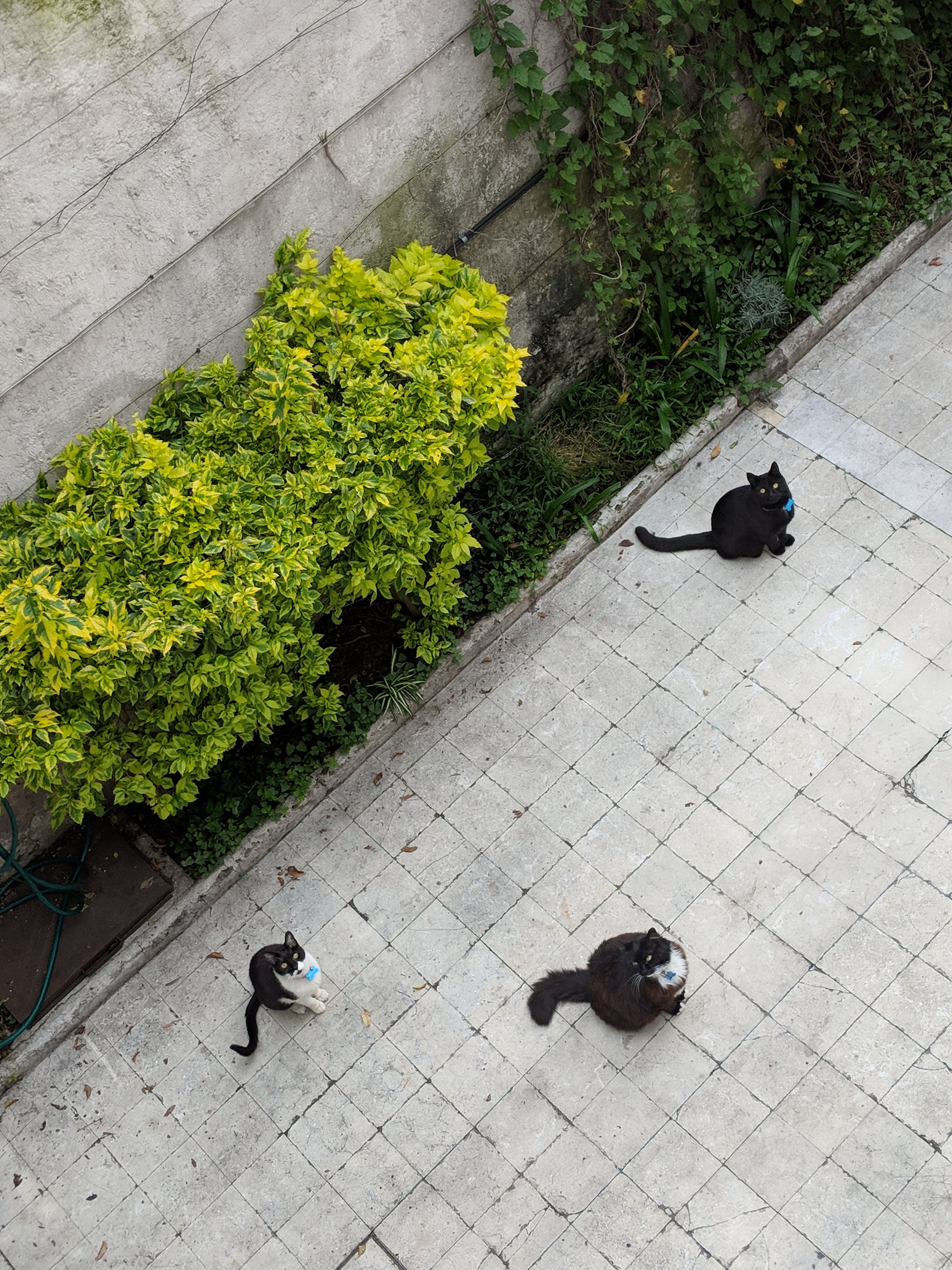The team of rivals—from left to right, Mister Grant (2001—2019), Parker, and Elliott—sunning on the patio at home in Coyoacán, Mexico City