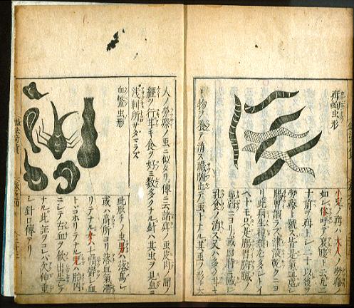 herb drawings.jpg