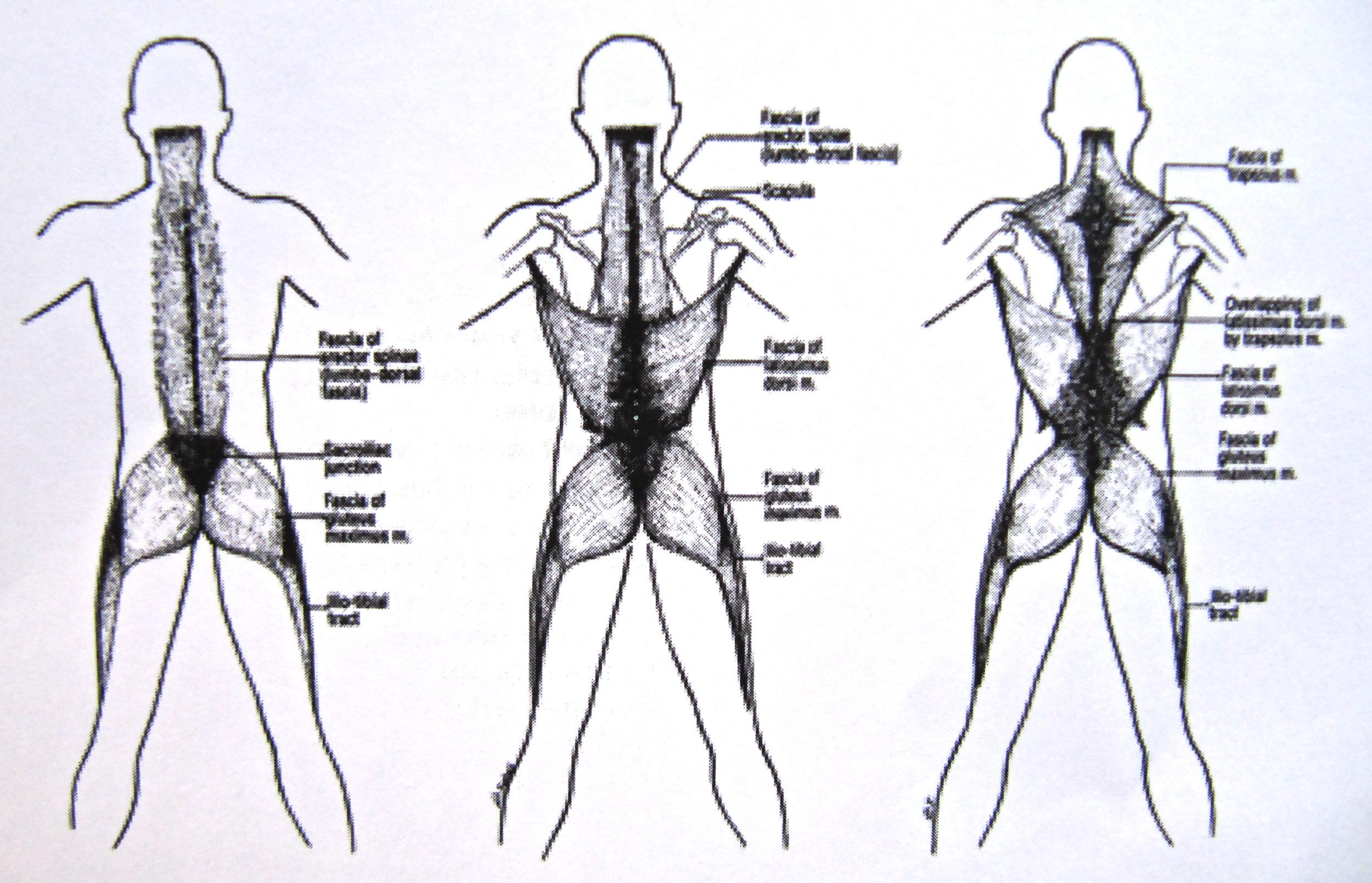 fascia 2.jpg