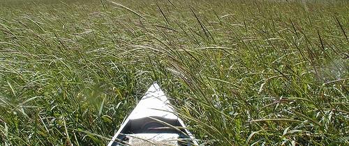 canoeinwrbed-500x210.jpg