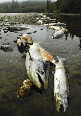 KlamathFishKill2002.jpg