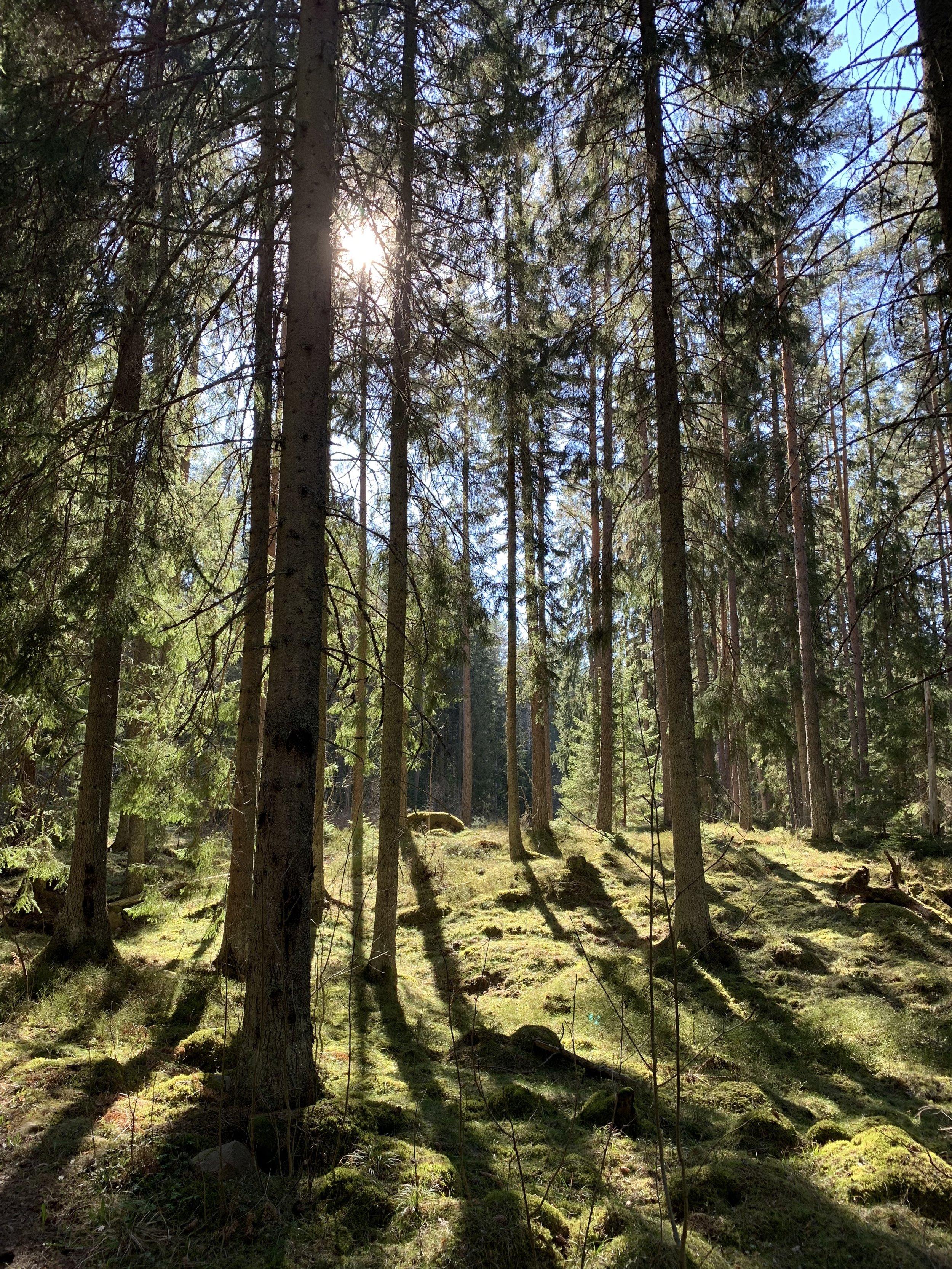 Skogsmiljön runt Uggletorp