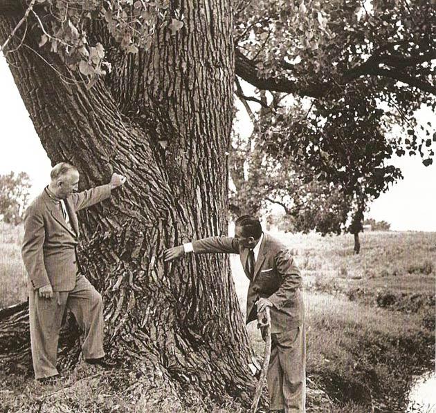 disneydreamingtree.jpg