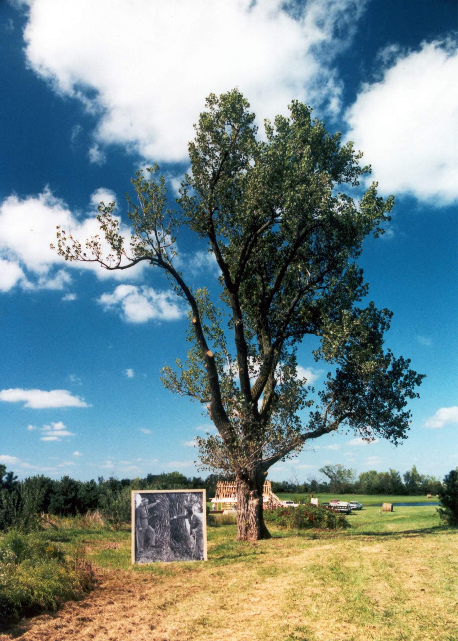 dis 07 birthday dreaming tree.jpg