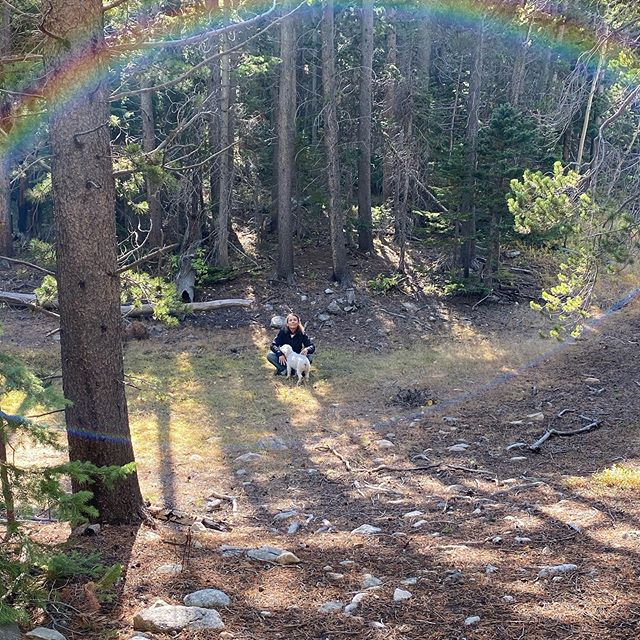 Under the rainbow! Backcountry forest in the Indian Peaks wilderness area! Yesterday's hike! #undertherainbow #rainbows #forest #hiking #colorado #coloradomountains #mountain #mountainhiking