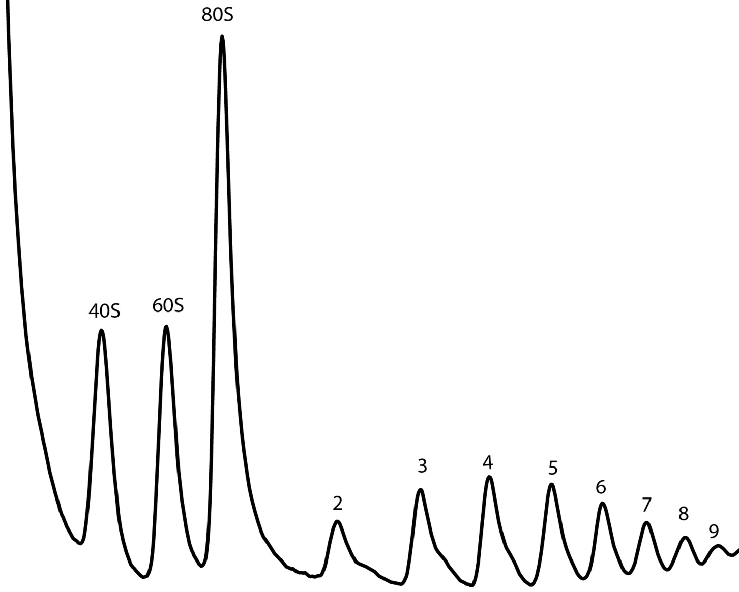 Ribosome fractionation on a sucrose gradient. Number of ribosomes in each peak is indicated. Gradient by Dr. Boris Zinshteyn
