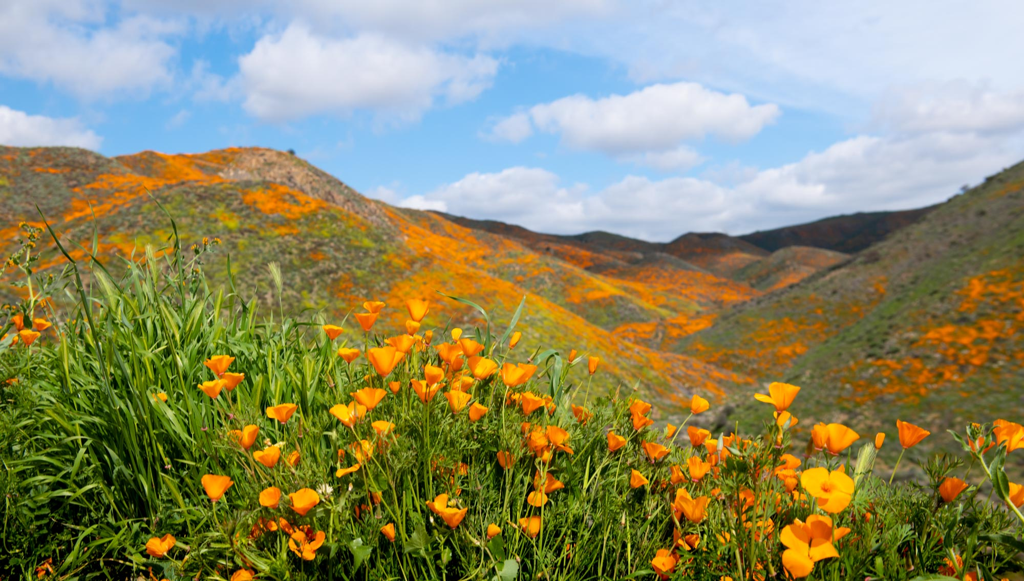 california-poppies-walker-canyon-1.jpg