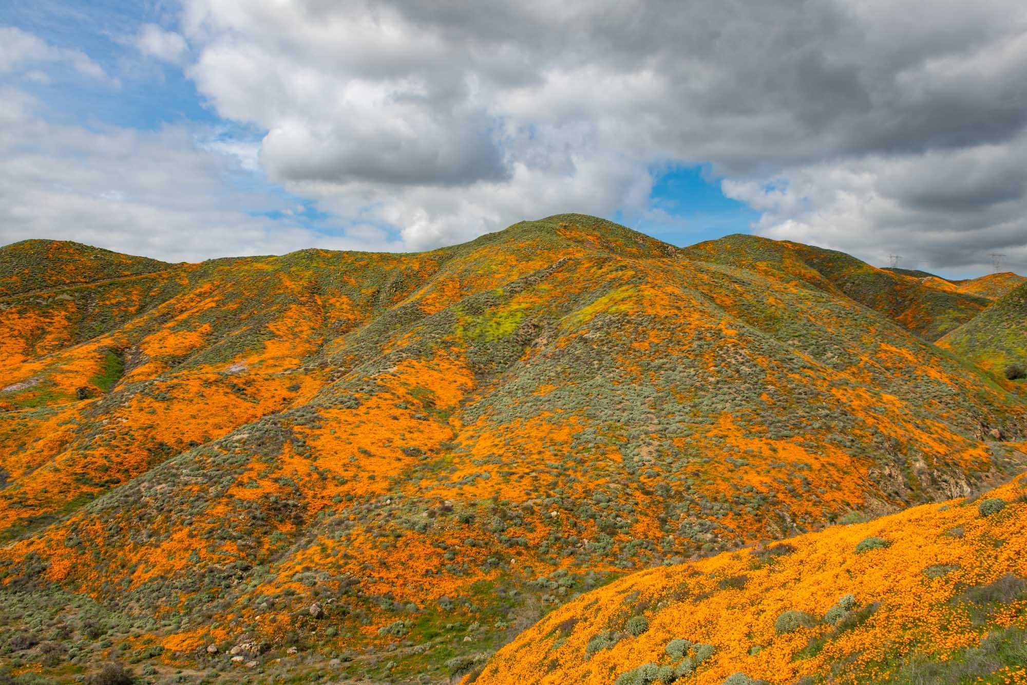 california-poppies-walker-canyon-5.jpg