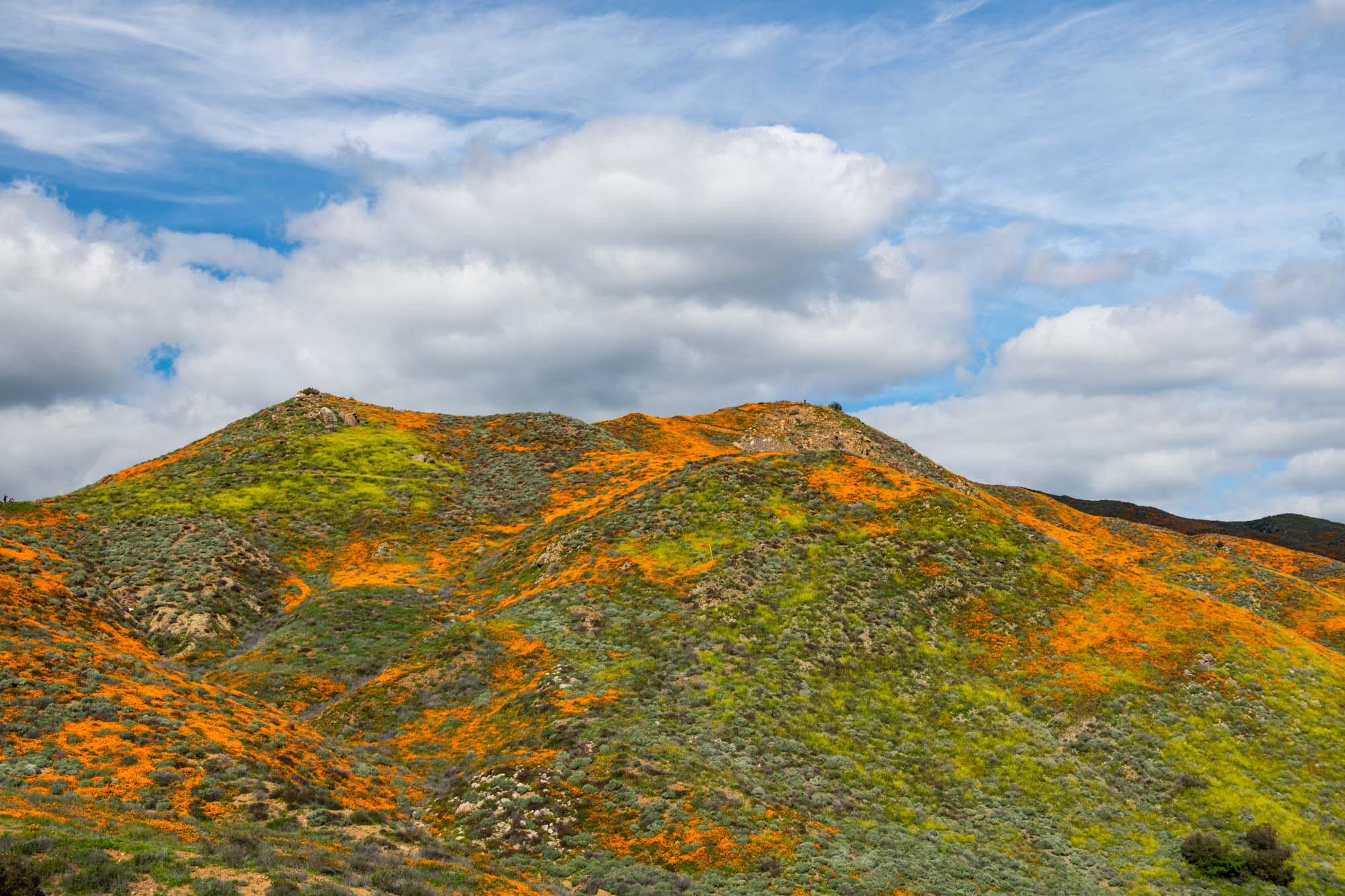 california-poppies-walker-canyon-12.jpg