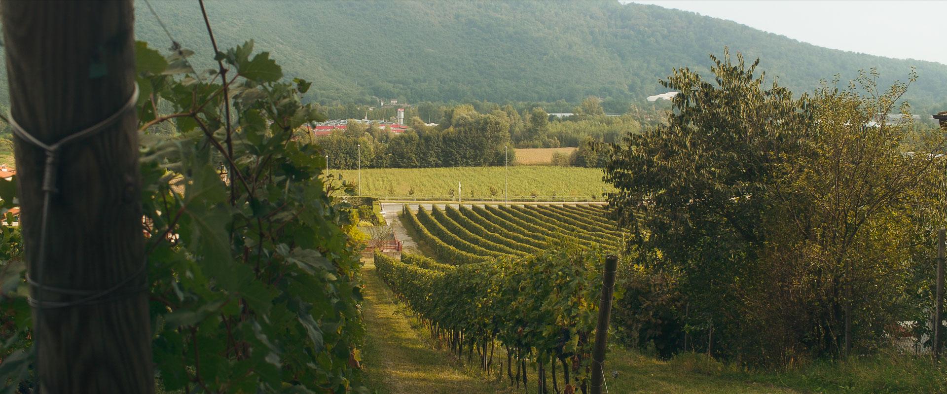 Landscape Botticino vineyard