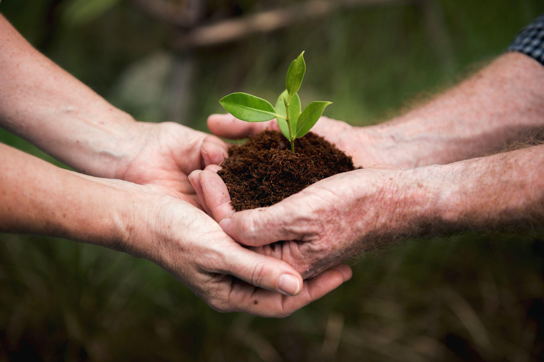 environmental-conservation-plant-sustainability-P9QCM9H.jpg (7360×4912) Small.jpg